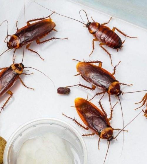 В квартире тараканы. Как понять, что появились тараканы?
