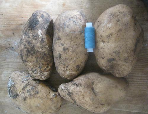 Лорх картофель характеристика. Сорт картофеля Лорх