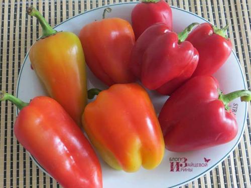 Как заморозить перцы на зиму свежими. Как правильно заморозить болгарский перец на зиму кусочками в домашних условиях?