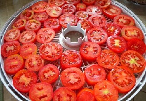 Как сушить помидоры. Электросушилка