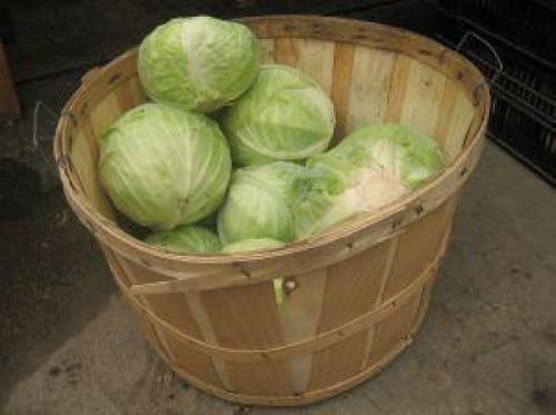 Как сохранить свежую капусту в погребе. Места и способы