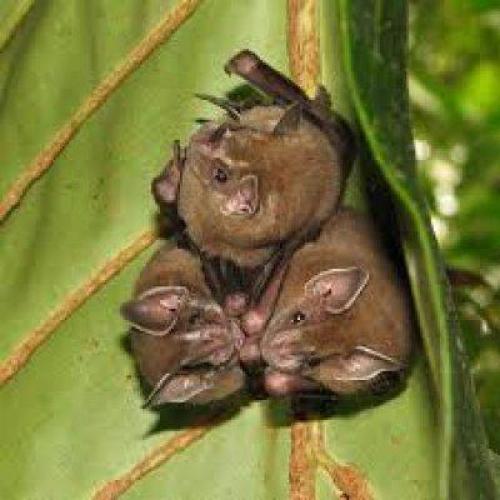 Где живут летучие мыши. Излюбленные места расселения