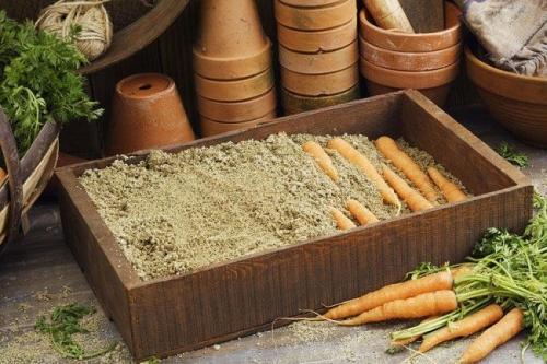 Как лучше сохранить на зиму морковь. Правила закладки моркови на хранение