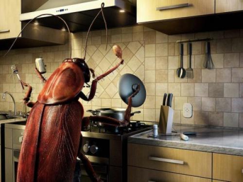 Народные средства от тараканов форум. Борьба с тараканами: как их вывести с кухни?