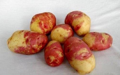 """Картофель сорт мария. Сорт картофеля """"Иван да Марья"""""""