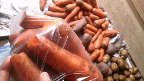 Как сохранить морковь в погребе зимой. В чем и как хранить морковь в погребе зимой: подборка лучших способов