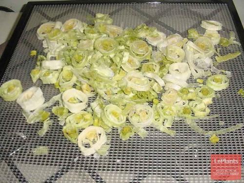 Как хранить лук порей зимой. Лук-порей в холодильнике