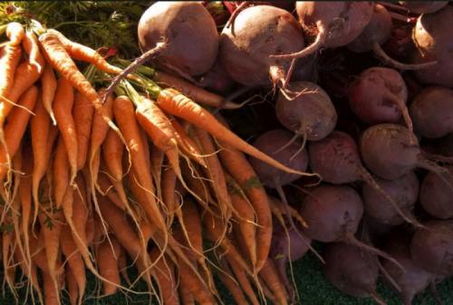 Как сохранить морковь в подвале. Методы хранения моркови и свеклы зимой