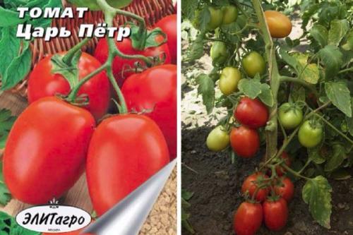 Царь петр томат. Описание и основные характеристики сорта
