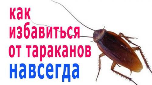 Как избавиться от тараканов народными средствами. Как избавиться от тараканов народными методами