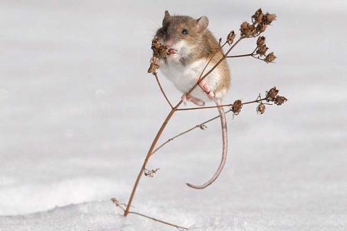 Что делают летучие мыши зимой. Виды зимнего сна у мышей