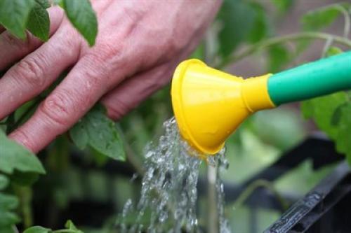 Спиртовой раствор борной кислоты для растений. Раствор для полива