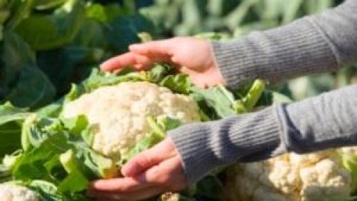 Как хранить цветную капусту на зиму. Основные правила