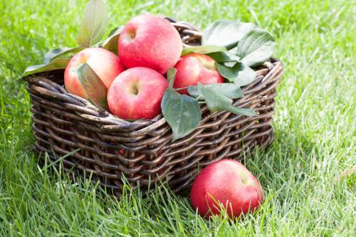 Как сохранить антоновку в домашних условиях. Как сохранить яблоки до весны