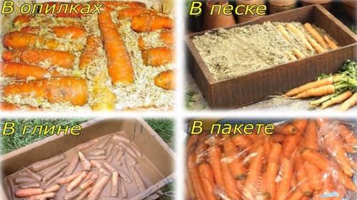 Хранение моркови в вакууме. Особенности хранения моркови в пакетах зимой в подполе