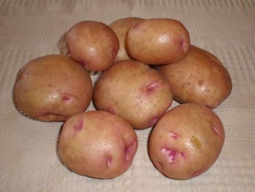 Картофель бородянский. Красные сорта картофеля: описание, фото, отзывы