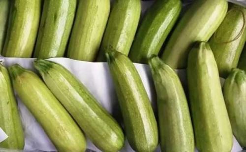 Хранение кабачков в домашних условиях на зиму. Выбор овоща и подготовка к хранению