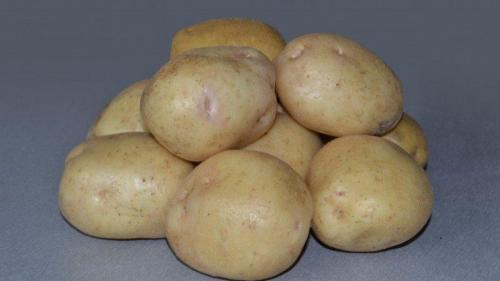 Невский сорт картофеля. Невероятное сочетание неприхотливости и урожайности сорта картофеля «Невский»