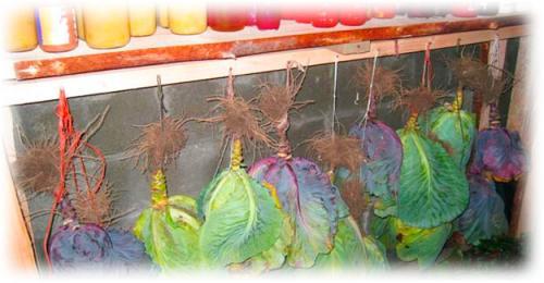 Длительное хранение тыквы. В каких условиях хранят?