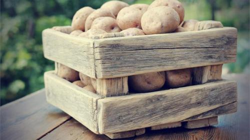 Срок хранения картофеля. Какой максимальный срок хранения картофеля и как его продлить