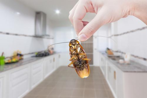 Борная кислота от тараканов. Помогает ли борная кислота от тараканов на самом деле