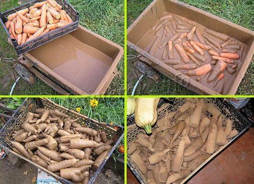 Как сохранить морковь на зиму в погребе. Какими методами можно хранить морковь?